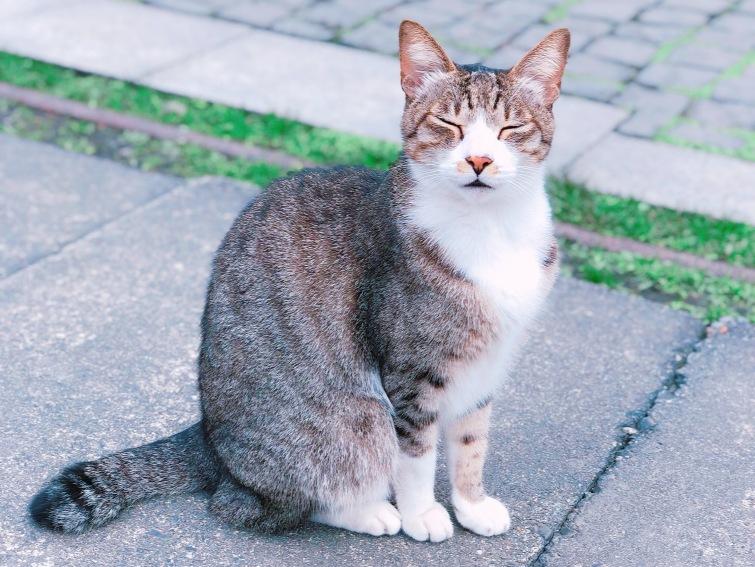 cat village taiwan8