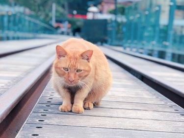 cat village taiwan5