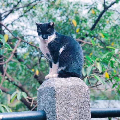 cat village taiwan7