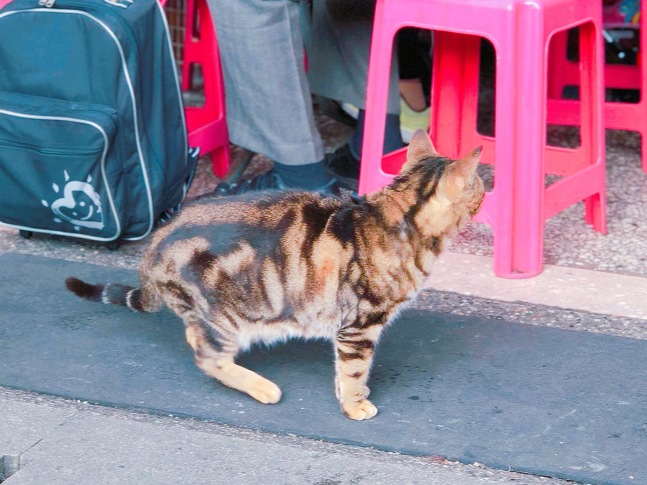 cat village taiwan10