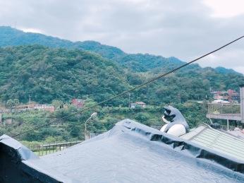 cat village taiwan33
