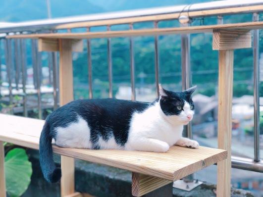 cat village taiwan38